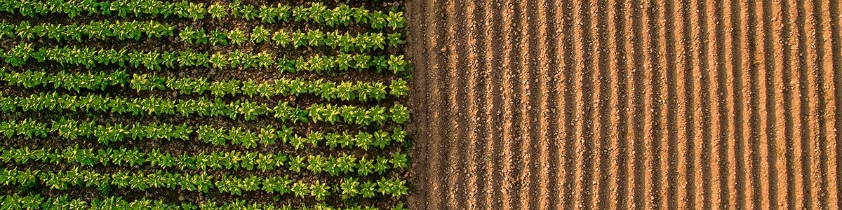 crop-field