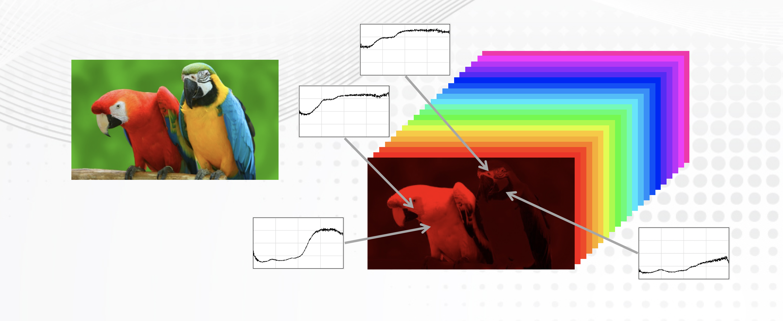 Color and Hyperspectral Parrot